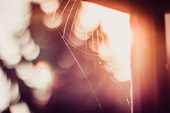 younger dreams (thethomsn) Tags: spiderwebs sunrise sunset bokeh window sun backlight flare dreams warmth light focus thethomsn photography 50mm home