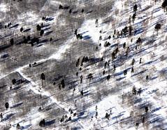 Trees (MelindaChan ^..^) Tags: siberia russia 俄羅斯 西伯利亞 tree snow cold winter chanmelmel melinda mel melindachan life pattern aircraft aeropland aerial flight