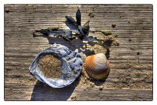 Still Life On Driftwood [Explore]