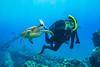 turtleDMar27-18 (divindk) Tags: andyklug cheloniamydas danielleklug hawaii hawaiianislands malaramp maui scientificname scubadiving underwater diverdoug diving endangeredspecies greenseaturtle marine oneill ocean reef sea seaturtle turtle underwaterphotography