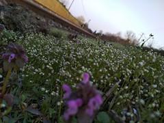 Nature near the railway (krystofandras) Tags: nature czech czechia flower flowers purple white grass rail railway train moravia green