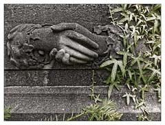 Entre minéral et végétal : pacte avec l'au-delà (Jean-Marie Lison) Tags: cimetière dieweg uccle bruxelles tombe sculpture lierre