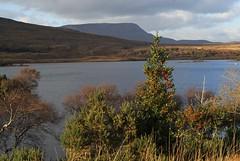 DSC02540 (margaret.metzler) Tags: ireland countydonegal donegal glenveagh glenveaghnationalpark nationalpark autumn lake lough loughbeagh tree festive christmastree 2017