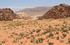 Wadi Rum (Wild Chroma) Tags: wadi rum wadirum jordan desert
