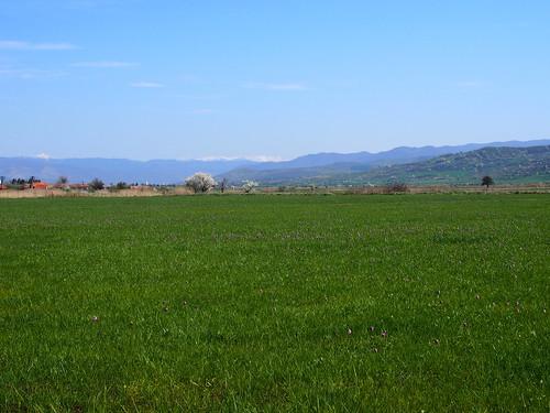 a holtmarosi liliomos rét / the fritillary meadow