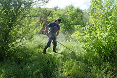 Clearing Weeds