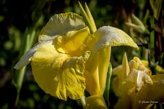 DSC_7861 (Chester Johnson) Tags: flowersplants spring