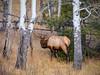 What's Up? (jphenney) Tags: elk lumpyridgetrailhead mountians rockies estespark rockymountains colorado