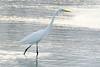 The Egrets are Back (NaturalLight) Tags: greategret egret chisholmcreekpark wichita kansas