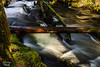 mothers messy forest (4snickers) Tags: forest trees water stream logs mossy rocky flowing cold seasonal rhododendron oregon unitedstates us