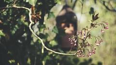 20180422-155817 - Spring Garden Bokeh (torstenbehrens) Tags: spring garden bokeh schleswigholstein deutschland olympus epm1 m42 28200mm zhongyi objektiv turbo ii efm43 wecellent m42ef adapter