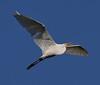 04-26-18-0014702 (Lake Worth) Tags: animal animals bird birds birdwatcher everglades southflorida feathers florida nature outdoor outdoors waterbirds wetlands wildlife wings