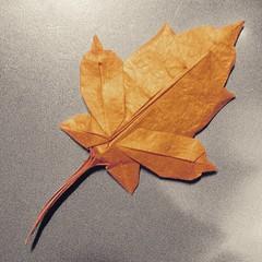 Maple leaf (guangxu233) Tags: origami origamiart paper art paperart paperfolding mapleleaf brianchan 折纸 折り紙作品 折り紙
