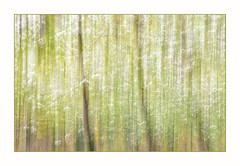 Tranquility (After-the-Rain) Tags: tranquility birdcherry icm intentionalcameramovement spring greatcorby ©joanthirlaway