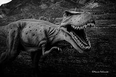Jurassic park... :-) (Mario Pellerito) Tags: canon eos 60d 1018 biancoenero blackandwhite bn mario mariopellerito pellerito pov sicilia sicilie sicily sizilien dinosauri giurassico jurassicpark jurassic trex