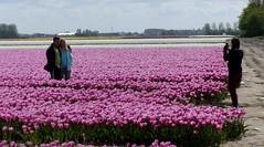 Foto Roel van Deursen Bollenpracht Goeree Overflakkee - Oude Tonge 2018-04-23 (23) (Roel van Deursen) Tags: tulpen vol bloei op goereeoverflakkee 2018