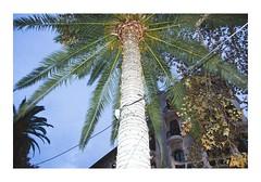 _JP18177 (Jordane Prestrot) Tags: ♑ jordaneprestrot majorque palma majorca mallorca palmier palmtree palmera christmas noël navidad guirland garland guirnalda