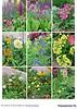 Цветники в саду №4 2018