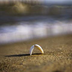 At the Chesapeake Shoreline (johngoucher) Tags: approved chesapeakebay bokeh sweet35 lensbaby sonyalpha sonyimages chesapeake annearundelcounty annearundel nature outdoors shore water sand shell waves maryland beverlytritonbeachpark beverlybeach