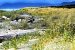 Driftwood beach (thomasgorman1) Tags: driftwood or oregon nikon outdoors shore beach sea ocean trail mountains
