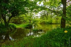 Creek /2 (FlickrDelusions) Tags: oxford trees creek oxfordshire river photowalk flickrmeetup meadow cherwell floodmeadow leaves england unitedkingdom gb