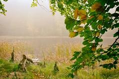 DSC_0080 - Kopie (Jens Scheider) Tags: buchenwald grumsin brandenburg uckermark