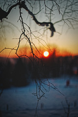 #183 - Winter sunset #2 / Zimní západovka #2 (photo.by.DK) Tags: winter wintersunset wintermood moodysunset moodywinter bokeh bokehlicious beyondbokeh oldlens legacylens manuallens manualfocus manualondigital wideopen shotwideopen pancolarauto5018mc pancolar pancolar50 pancolarauto pancolarauto50 pancolar5018 carlzeiss czj czjpancolar carlzeisspancolar artbydk photobydk sonya7 sonyilce sony sonyalpha sonya7ii