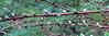Lariksknopjes (doevos) Tags: coachgroep hogeveluwe npdhv nationaalparkdehogeveluwe rodeheidelucifer veluwe lariks lork