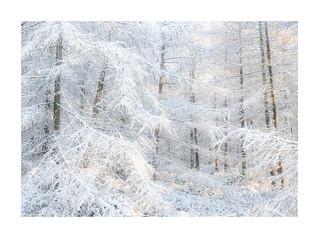 Snowfall, Mendip Hills, Somerset
