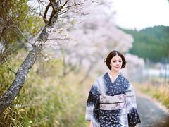 春風 ( spring wind ) by HarQ Photography - GFXS0087-L FUJIFILM GFX50S SPEEDMASTER 85mm F1.2