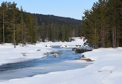 Frozen lake (anacm.silva) Tags: lake lago sweden suécia torsby lekvattned nature naturaleza natureza escandinávia sverige