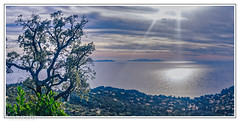 Last lights for the tree (Ub R M) Tags: 83 cotedazur frenchriviera hubertmarrone lgg4 lgh815 ubrm arbre azur bleu bleuazur blue cavalaire ciel cloud clouds colors couleurs eau europe france frontdemer heaven hyeres ile kinghubi landscape massifdesmaures maures mediteranean mediterranean mediterrannée mediterranée mer merméditerrannée méditerrannée nature nuages outdoor outdoors paca panorama panoramique paysage photographic photographics provence realcolors resort riviera sea seascape sky soleil sun sunrise sunset truecolors var vuepanoramique water weather