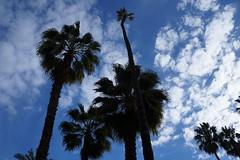 Barcelona (morganesvt) Tags: vacances barcelona palmiers ciel bleu chaleur holidays espagne exploration europe travel paysage sky voyages sun soleil weekend spain