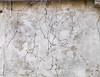 Vine Play, Stodes Mill (cobalt123) Tags: april canon5dmarkiv east pennsylvania stodesmill composition linearlove vines