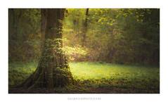 New (Amar Sood) Tags: amarsoodphotocom amarsoodphotography nikon d800e landscape landscapes intimatelandscape woodland green tree tamron 7020028