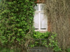 Wo Dornröschen wohnt (Magreen2) Tags: soft window plants enchanted wildhouseoldpittoresque dreamy historic ivy