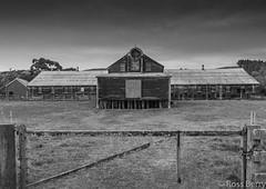 Maraekakaho Woolshed (rossmberry) Tags: maraekakahowoolshed hawkesbay newzealand black white sheep antique old
