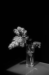 03_05_2018008.jpg (JC. Marugán) Tags: summicron50 byn leicam42 argentiapx100 film rodinal revelado filtros epsonv500 filtroverdeamarillo rodinal1247min20º opticasmanuales panx