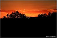 Ocaso (gjedbz) Tags: ocaso atardecer paisaje oro sol canal imperial aragón zaragoza luz