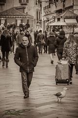 Di pari passo (boscoloaaron1) Tags: street biancoenero strada blackwhite bw vita quotidiano gente people animal animale uccello bird gabbiano venezia nikon tamron italia italy veneto centro città city center life fotografia photography allaperto tamron18200 18200 seagull