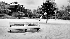 Snow in Bushwick, Maria Hernandez Park