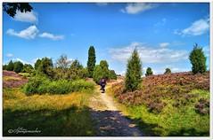 Mit dem Fahrrad durch das Heidetal (Don111 Spangemacher) Tags: himmel heidekreis heide heideblüte hochsommer pflanzen park niedersachsen natur naturschutzgebiet naturpark norddeutschland niederhaverbeck landschaft lüneburgerheide erika reisen romantik urlaub bunt kulturlandschaft gras wolken wege