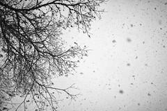 DSC_3646-Edit (vargandras) Tags: snowfall sky tree snow nikkor 35mmf2d