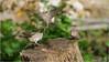 LR7-PGH55378 (JB89100) Tags: 2018 6kphotomode effetsspeciaux moineau oiseaux quoi