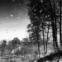 Anywhere (Diaffi) Tags: surreal mirror water zeissikonzm zeisscbiogont2835zm kodaktrix iso400 ishootfilm selfdeveloped analog film bw squareformat trees reflection