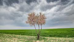 Spring (drstar.) Tags: spring nikond610