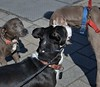 Three Way Meeting (Scott 97006) Tags: dogs meet greet cute animals canine pets