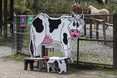 Happy Cow Bench Monday (ruthlesscrab) Tags: bench cow maplewoodfarm northvancouver bc canada