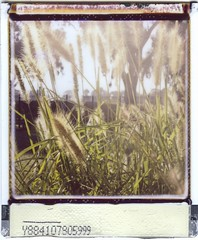 Brushes (mortiemctavern) Tags: polaroidweek roidweek2018 lomoinstant instax plants brushes day52