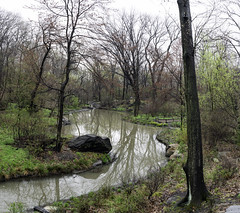 The Ravine (Joe Josephs: 3,166,284 views - thank you) Tags: centralpark landscape landscapephotography nyc newyorkcity travel travelphotography urbanexloration outdoorphotography outdoors parks peaceful quiet tranquil urbanparks stream ravine water forest trees